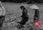 Image of Vietcong captured by Marines Vietnam, 1967, second 57 stock footage video 65675073301