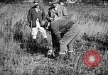 Image of Cocker Spaniels Verbank New York USA, 1935, second 16 stock footage video 65675073364