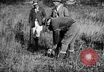 Image of Cocker Spaniels Verbank New York USA, 1935, second 17 stock footage video 65675073364