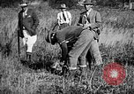 Image of Cocker Spaniels Verbank New York USA, 1935, second 20 stock footage video 65675073364