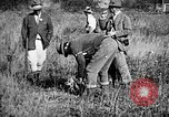 Image of Cocker Spaniels Verbank New York USA, 1935, second 22 stock footage video 65675073364