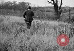 Image of English Springer Spaniels Verbank New York USA, 1935, second 13 stock footage video 65675073366