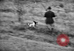 Image of English Springer Spaniels Verbank New York USA, 1935, second 44 stock footage video 65675073366