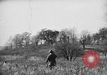 Image of English Springer Spaniels Verbank New York USA, 1935, second 60 stock footage video 65675073366
