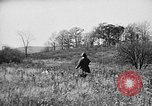 Image of English Springer Spaniels Verbank New York USA, 1935, second 62 stock footage video 65675073366