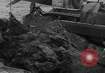 Image of tractor plows Holland Netherlands, 1954, second 13 stock footage video 65675073518