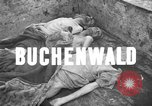 Image of corpses Germany, 1945, second 3 stock footage video 65675073818