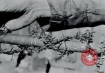 Image of Breendonck Concentration Camp Belgium, 1945, second 19 stock footage video 65675073887