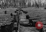 Image of United States soldiers Italy, 1943, second 18 stock footage video 65675076939