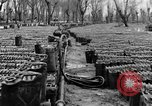 Image of United States soldiers Italy, 1943, second 24 stock footage video 65675076939