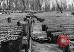 Image of United States soldiers Italy, 1943, second 31 stock footage video 65675076939